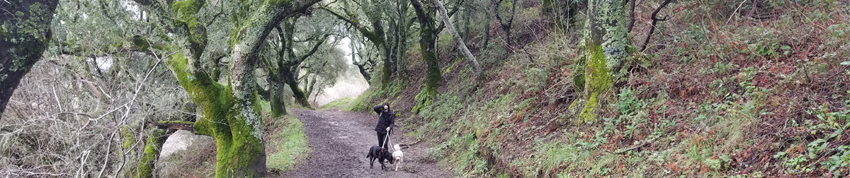 Pictures of dog outings